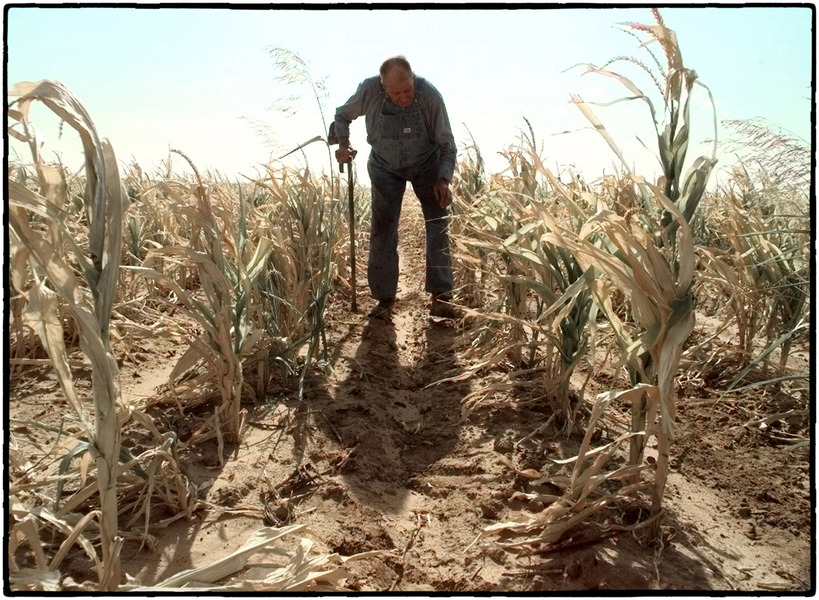 Dying corn fields in western Oklahoma . : The Aftermath Sessions : Oklahoma City Editorial and Documentary Photographer